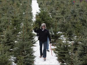 Где купить елку в Барнауле