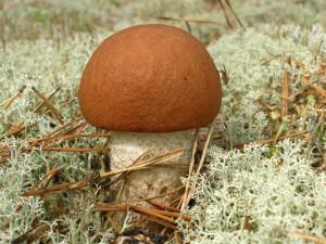 грибы в Барнауле