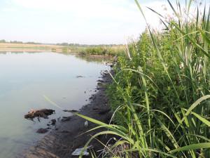 Озеро Моховое Барнаул