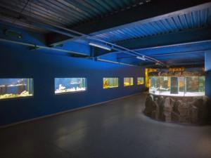 выставка Подводный мир в Барнауле
